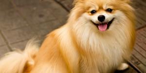 犬の気持ちがわかる!?「バウリンガル」アプリを使ってみた!